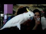 Говорящий попугай на выставке в Твери