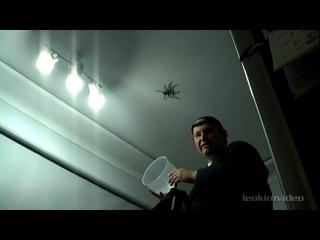 большой паук. часть первая. или как не стоит их ловить!
