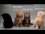 «прикольные фотки» под музыку WaP.Ka4Ka.Ru - Элвин и бурундуки (О.романцов) - Арам зам зам. Picrolla