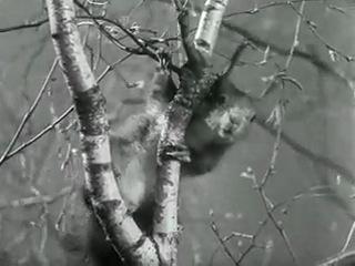 Жан Ренуар. ПРАВИЛА ИГРЫ. 1939