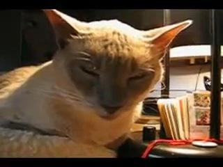 прикольное видео про кот)Э