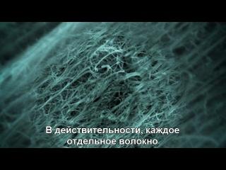 ВВС : НЕВИДИМЫЕ МИРЫ / 3 СЕРИЯ / ( С СУБТИТРАМИ . ВЕЛИКОБРИТАНИЯ , 2010 )