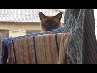 РЖАКА: Неудачный паркур кота!