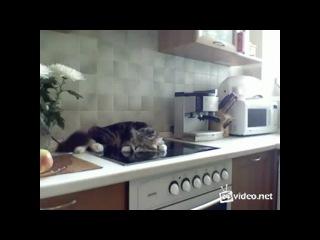 Как нужно разговаривать со своим котом