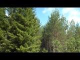(Моё собственное видео) Прогулка по лесу...