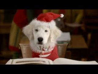 Рождественская пятерка / Santa Buddies (2009) Трейлер HD
