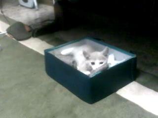 Забавный котенок Яша