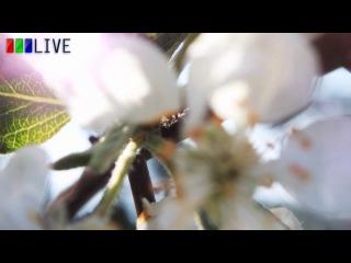 «Времена года» в Суханово Парк. Весна