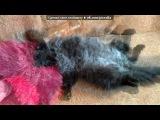 мои котики!!! под музыку Смешная песня - про вашего кота Кусю . Picrolla