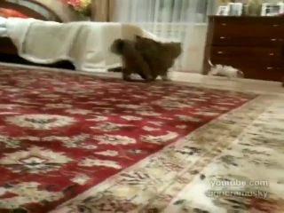 собака троллит толстого кота