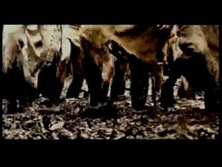 2002 - Metsatöll - Hundi Loomine