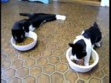 что бывает с кошками если их накурит))))
