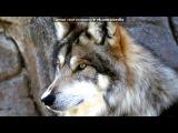 Волки... под музыку DJ Troy feat DJ Gav@N vkhp.net - клубнячок 2011. Picrolla