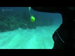Что будет, если разбить куриное яйцо под водой