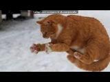 «Коты!» под музыку Позитив - Тик ток бурундушки!!!. Picrolla