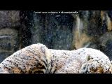 «Тигры» под музыку 3oh!3 feat Katy Perry - Starstrukk (2009)(OST
