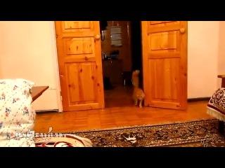 Прикол над котом)