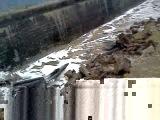 набережная Северодвинска 15 ноября 2011