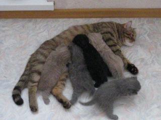 Наше пятикратное прибавление кошачьего семейства