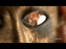 Спартак Возмездие трейлер ( Spartacus: Vengeance - Trailer )