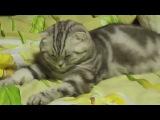 Кошка отрубилась