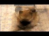 «микуся» под музыку Кошка-бошка и Собака-Улыбака - Такая песня смешная, зайка, как будто специально про нас =))) люблю тебя!!!!!!!)). Picrolla