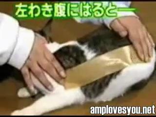 что будет если кошке наклеить скотч?!