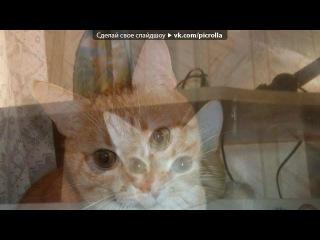 «КотЭваторы 3» под музыку Песня - про котят =)))Из рекламы ВИСКАС))). Picrolla