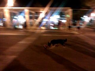 По-моему, в Испании даже собаки играют лучше в футбол, чем наши игроки)