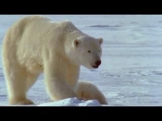 BBC: Рассказы о животных / BBC: Wild Tales (episodes 17-20) (1996) DVDRip