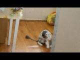 Кот, котик, прикол, смешно, ржака, до слез, мило, Яша, стрижка :)