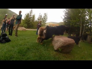 Gopro hd dogs of the teva mountain games 2012