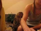Кот, котик, мило, погладь котика, смешно, няша, забавно, уруру :)