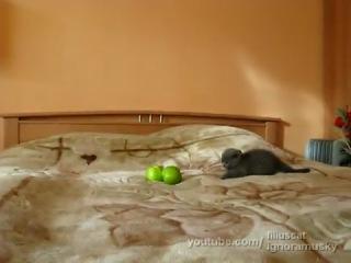 Котёнок и два очень страшно опасно ужасных яблока! (Слабонервным не смотреть!!!)