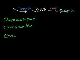 chromosomes--chromatids--chromatin--etc