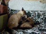 Саша и Яся в Опалихе 270712 г