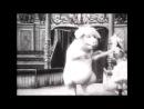 Танцующая свинья/Le cochon danseur (1907)