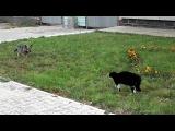 Ржака :D кот против пса!