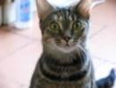 Говорящая кошка. Cat that can talk.