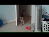 Кот, котик, испуг, удивление, неожиданность, страх, паника, смешно, прикол, ржака :)