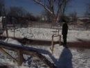 Отроботка сидеть, лижать, стоять.Собаке на видео 4 месяца.