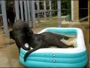 Надувной бассейн и слонята.