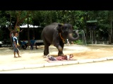 Слон и я или Настоящий массаж по-тайски :)