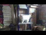наш кот Валдис очень любит попугая Роки