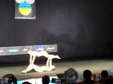 Відкритий Кубок України по Бодібілдингу - Caramel Pole Dance Studio - Duet Double S