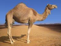 Kent Camel, 21 августа , Киев, id50114450