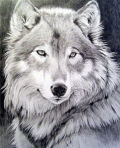 http://cs5113.vkontakte.ru/u7038385/115977267/x_96c7c69c.jpg