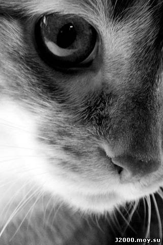 Кошка: предпросмотр.