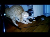 Кот, который боится и издаёт прикольные звуки