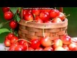 «вишня» под музыку Елена Есенина - Когда созреет вишня в моём саду, ты станешь в жизни лишним, и я уйду.. Picrolla